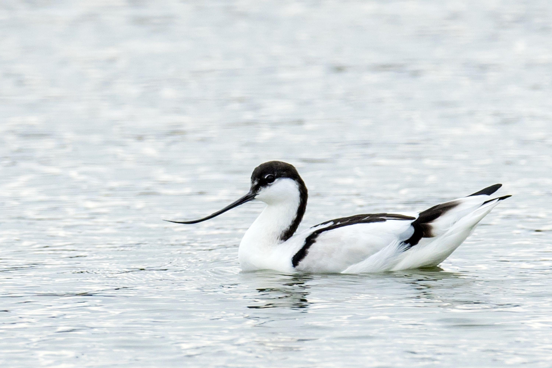 愛らしい鳥たちの姿を目に焼き付けよう<br /> 野鳥愛好家たちが熱視線を送る<br /> 沖縄・粟国島でバードウォッチング!